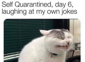 17 Funny cat memes about being quarantined