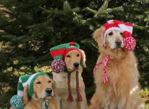 Pets wearing hand-knitted hats are gonna keep you warm – 20 Pics