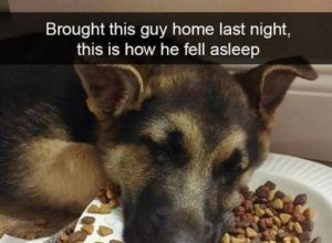 Animals are more funny than people – 50 Funny Pictures
