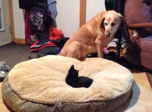 Cats who steal dogs' beds are the worst – 24 Pics & GIF