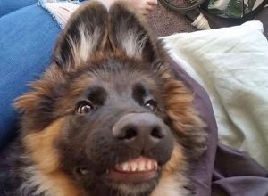 Happy dogs will put a smile on anyone's face – 30 Pics